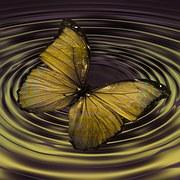 butterfly-768353__180